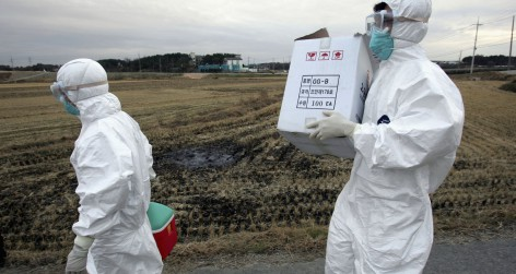 Avian flu found In South Korea (Photo by Chung Sung-Jun/Getty Images)
